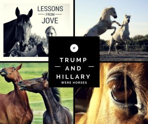 If Trump and Hillary were horses...